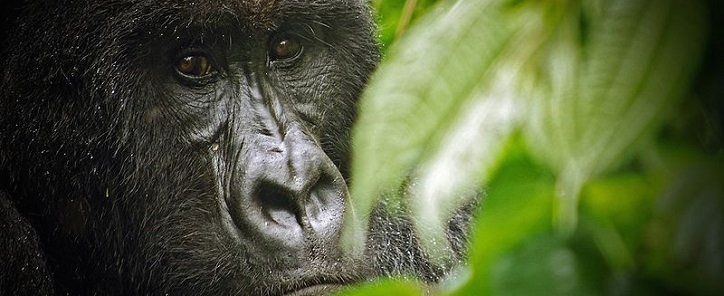 Democratic Republic of Congo – Virunga