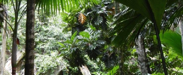 Seychelles – Vallée De Mai