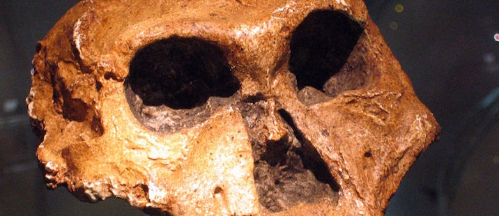 South Africa – Fossil Hominid