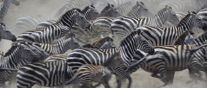 Tanzania – Serengeti